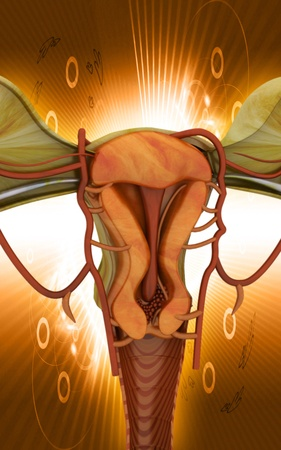 Digital illustration of  Uterus  in  colour  background Stock Illustration - 10028608