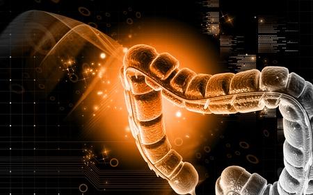 Digital illustration of large intestine in colour background Stock Illustration - 10028787