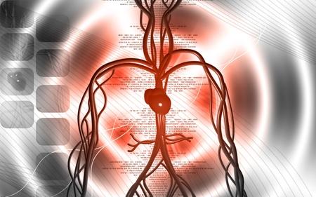 blood circulation: Digital illustration of vascular system in colour background