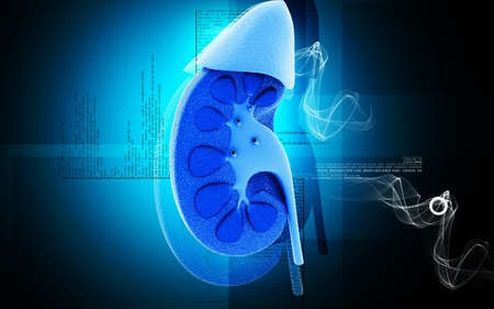Digital illustration of  kidney in colour  background   Stock Photo