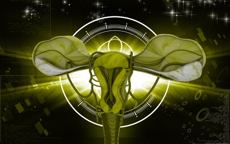 Digital illustration of  Uterus  in  colour  background  illustration