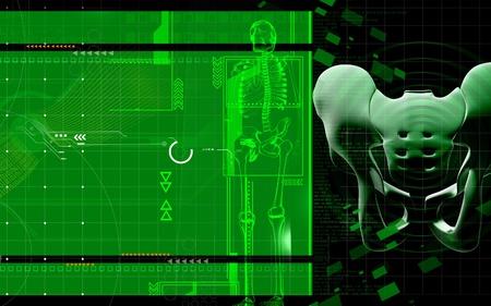 Digital illustration  of pelvic girdle in    colour background Stock Illustration - 10135505