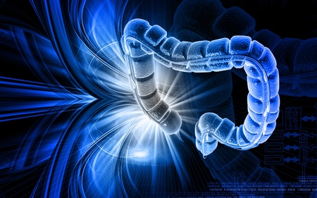 Digital illustration of large intestine in colour background Stock Illustration - 10135576
