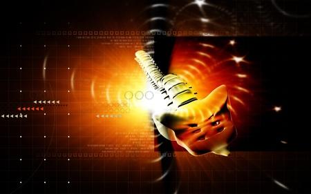 Digital illustration  of back bone in colour background   Stock Illustration - 10174168