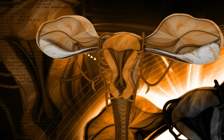 endometrial: Digital illustration of  Uterus  in  colour  background