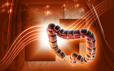 Digital illustration of large intestine in colour background  Stock Illustration - 10333458