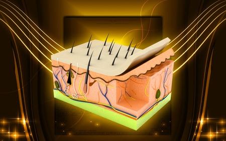 organos: Ilustraci�n digital de piel en el fondo de color Foto de archivo