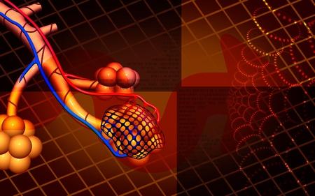 alveolos: Ilustraci�n digital de alv�olos en el color de fondo