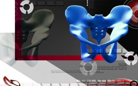 Digital illustration  of pelvic girdle in    colour background Stock Illustration - 20394172