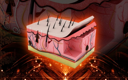 organ: Digital illustration of Skin in colour background Stock Photo