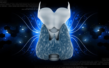 Digital illustration of  thyroid in colour  background  Stock Illustration - 10433607
