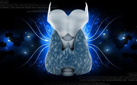 Digital illustration of  thyroid in colour  background Stock Illustration - 10433607