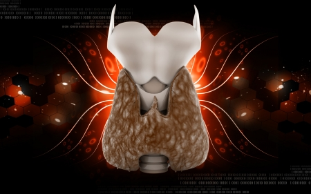 thyroid: Digital illustration of  thyroid in colour  background