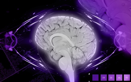 Digital illustration of  brain in colour  background  Stock Illustration - 10433736