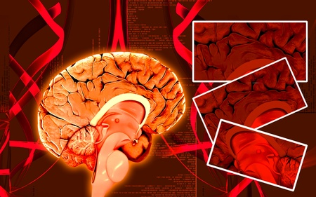 medulla: Digital illustration of  brain in colour  background   Stock Photo
