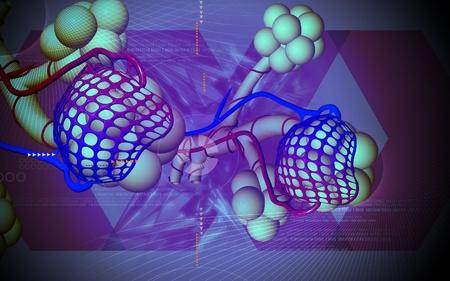 alveolos: Ilustraci�n digital de los alv�olos en el color de fondo Foto de archivo