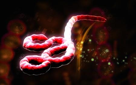 Digital illustration of Ebola virus in   colour background    illustration