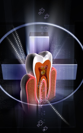 Digital illustration of  teeth cross section   in  colour  background Stock Illustration - 11086864