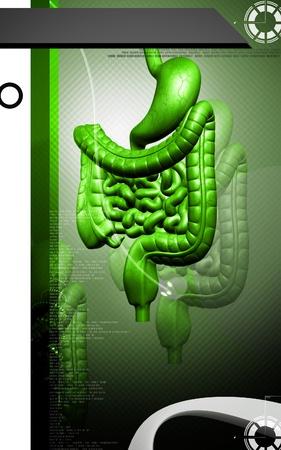 Digital illustration of human digestive system in colour background Stock Illustration - 11223500