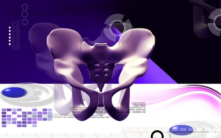 Digital illustration  of pelvic girdle in    colour background Stock Illustration - 11383995
