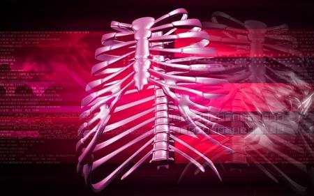 Digital illustration of  rib cage  in colour  background  illustration