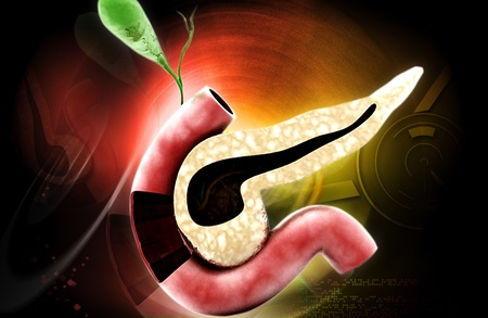 Digital illustration of pancreas  in colour background