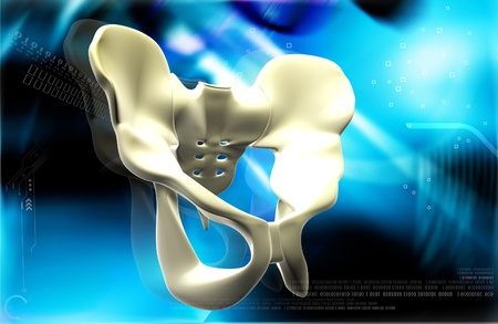 pubis: Digital illustration  of pelvic girdle in    colour background    Stock Photo