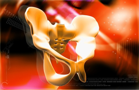 Digital illustration  of pelvic girdle in    colour background Stock Illustration - 12155931