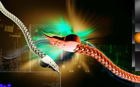 Digital illustration  of back bone in    colour background Stock Illustration - 12443476