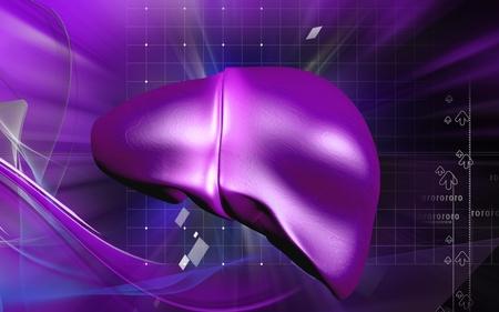 Digital illustration of  liver  in  colour  background