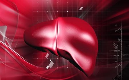 Digital illustration of  liver  in  colour  background Stock Illustration - 12443683