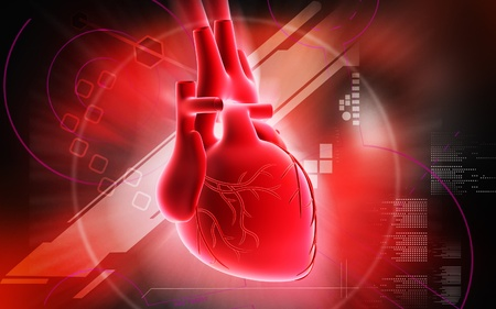ventricle: Heart  Digital illustration of  heart  in  colour  background  Stock Photo