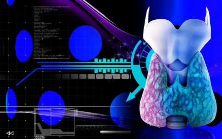epiglottis: Digital illustration of  thyroid in colour  background