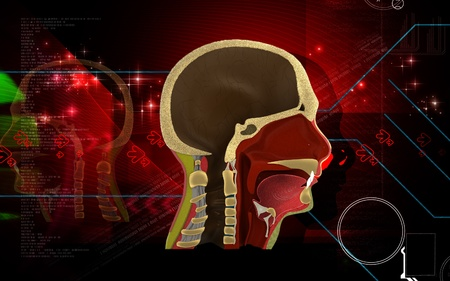 Digital illustration of Pharynx in colour background Stock Illustration - 12745785