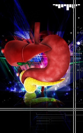 Digital illustration of          Liver and stomach in colour  background  Stock Illustration - 12745307