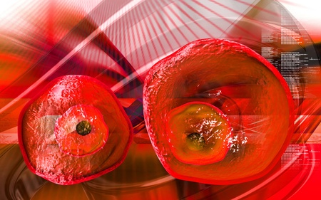 Digital illustration of  ovum cell in colour  background  Stock Photo