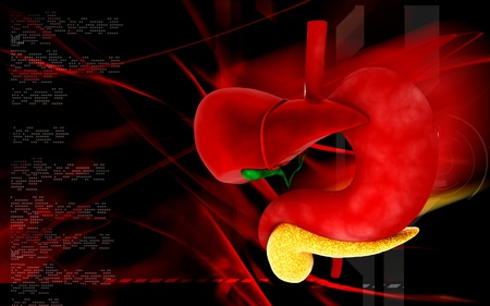 Digital illustration of          Liver and stomach in colour  background Stock Illustration - 12745725