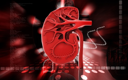 Digital illustration of kidney in colour background Stock Illustration - 12745700