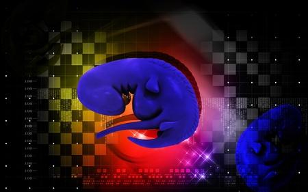 Digital illustration of Embryo  in colour background Stock Illustration - 12745468