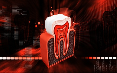 Digital illustration of  teeth cross section   in  colour  background  Stock Photo