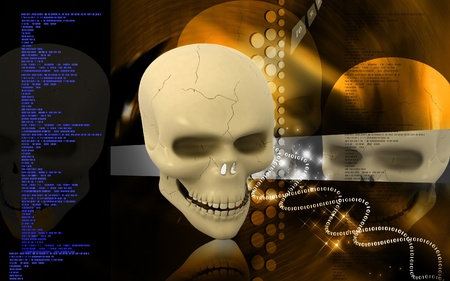 Digital illustration of  Human skull  in  colour background  illustration
