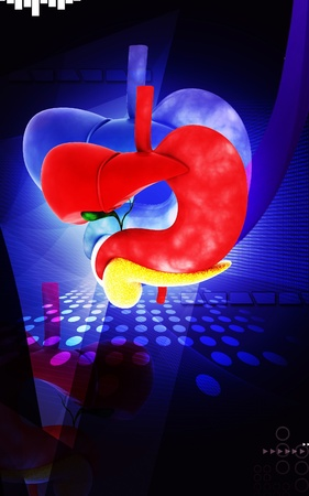 Digital illustration of          Liver and stomach in colour  background   illustration