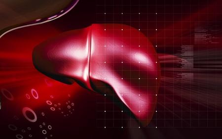 Digital illustration of  liver  in  colour  background Stock Illustration - 13083463
