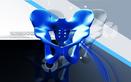 Digital illustration  of pelvic girdle in    colour background Stock Illustration - 13327562