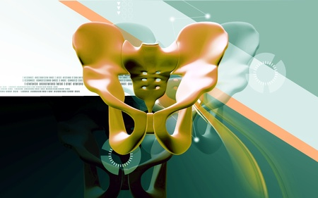 Digital illustration  of pelvic girdle in    colour background Stock Illustration - 13327563