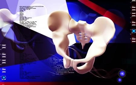 Digital illustration  of pelvic girdle in    colour background Stock Illustration - 13703544