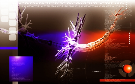 Digital illustration of  neuron  in colour  background  Stock Illustration - 13703622