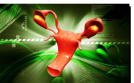 aparato reproductor: Overies ilustración digital y el útero en el color de fondo