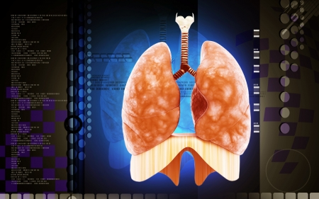 Digital illustration of human lungs in colour background  illustration