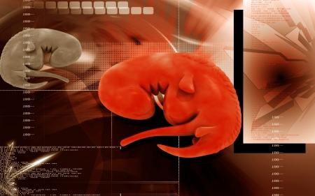foetus: Digital illustration of Embryo  in colour background